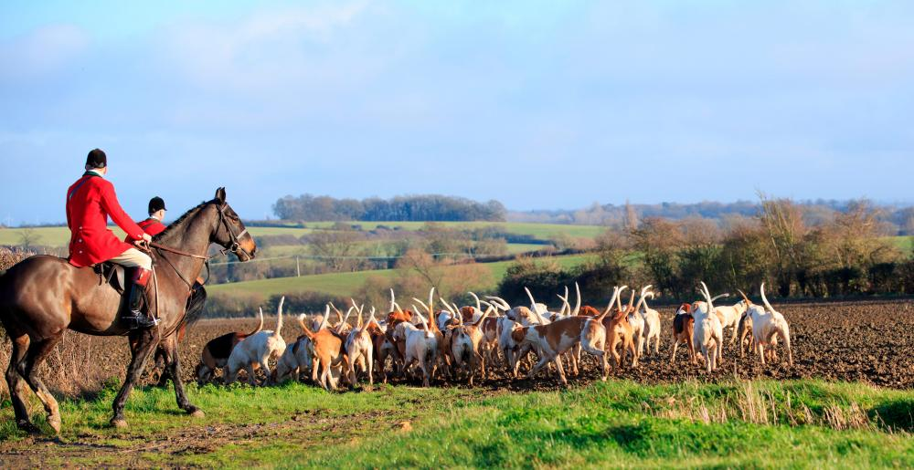 A group of fox hunters with their hounds
