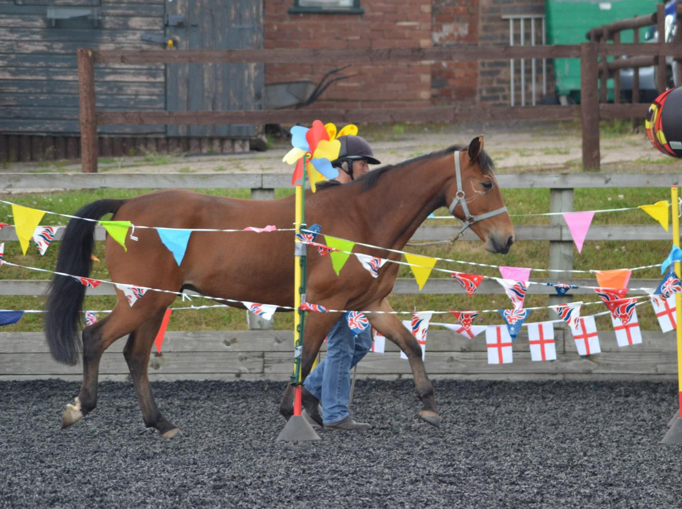 Equine Agility contest