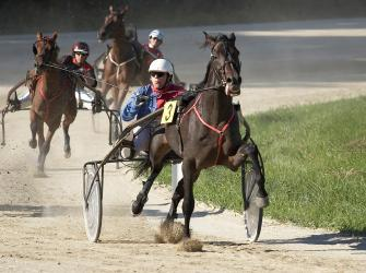 Contestants in a Harness or Trotting race